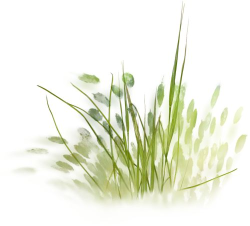 75 Best Png Small Plants Grasses Images On Pinterest