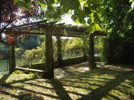 How to Build a Grape Arbor Arch Trellis with a Pergola Design thumbnail