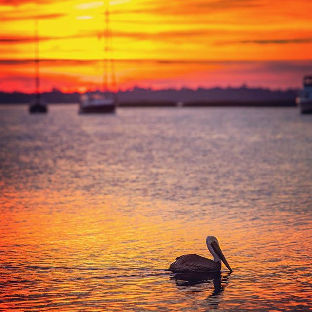 376 Best Images About Amelia Island, Florida. On Pinterest