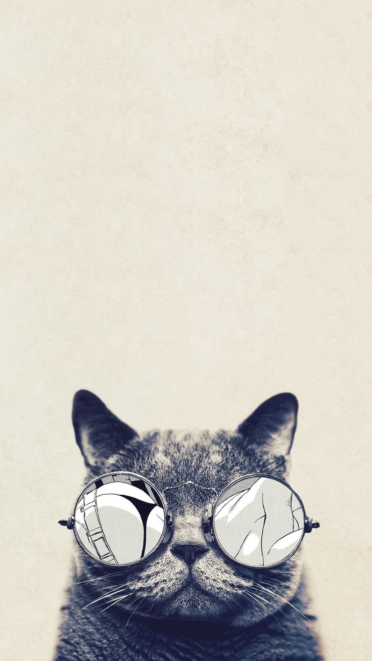 Wallpaper iphone cute cat - Cool Cat Glasses Iphone 6 Plus Hd Wallpaper Funny Iphone Wallpaper Gallery