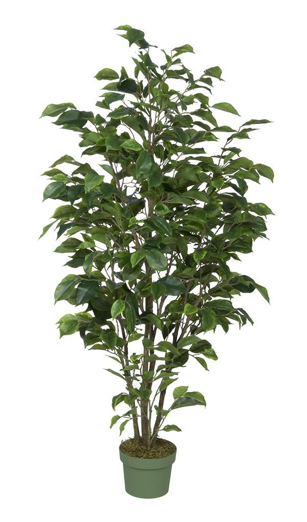 this artificial ficus tree is handcrafted by house of silk flowers show your sense of style by adding this to an empty corner in any room of