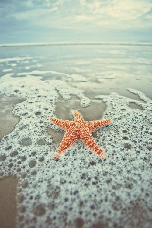We're loving this gorgeous starfish photo. Summer at Emerald Isle can't come fast enough!