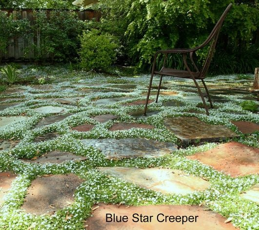 220 Best Images About Groundcover Ideas On Pinterest
