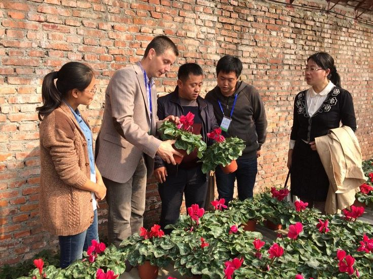 In China much attention for the large flowered cyclamen Super Serie Mammoth