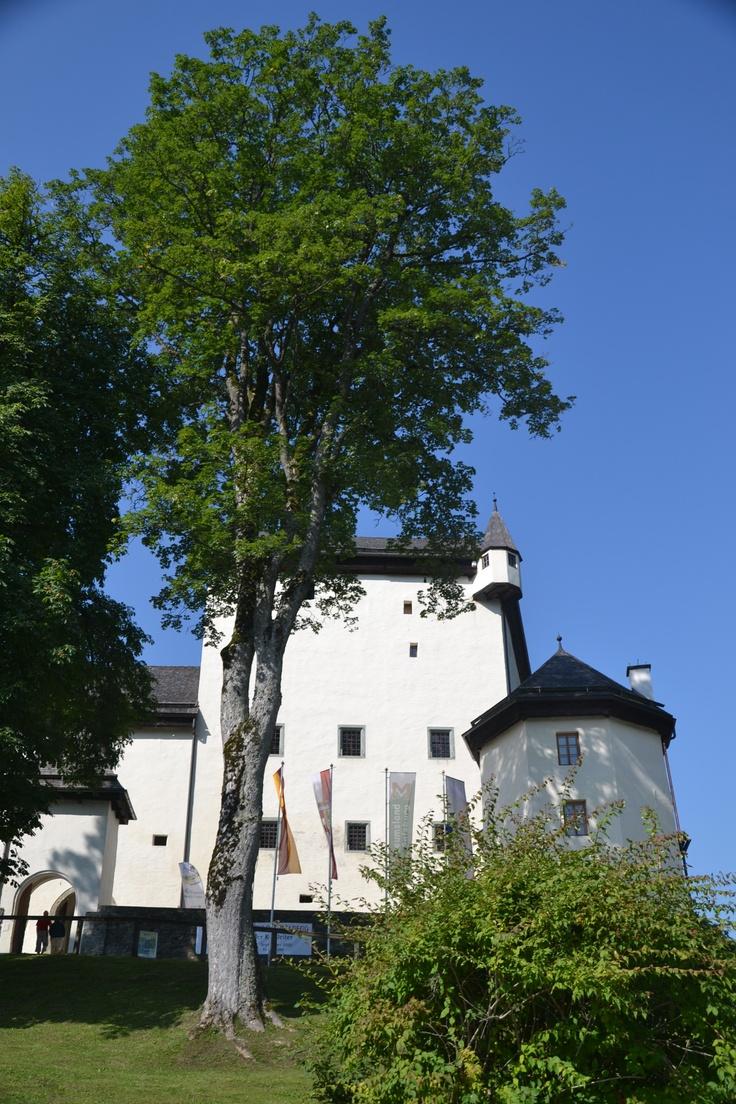 Goldeggのお城の前の大木。お城と歴史を共にしてきたのではないかしら、と思えるような立派な木でした。©Taky.Massaro