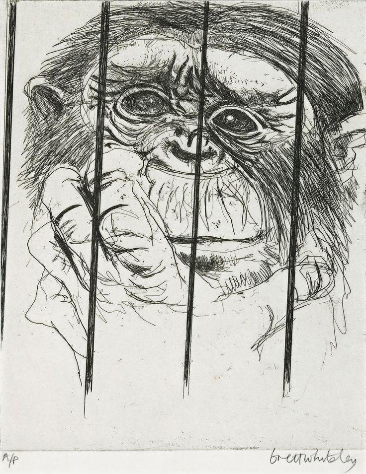 Brett Whiteley (1939—1992) Monkey, Taronga Park Zoo, Sydney, 1979 etching 24.5 x 20.0 cm