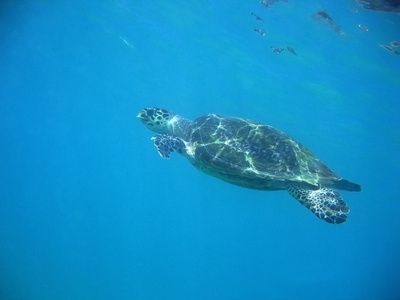 8 best Marine Bio \/ Diving images on Pinterest Ocean life - marine biologist job description