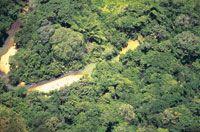 Selva de piedemonte en la vertiente de la cordillera central, departamento de Putumayo.