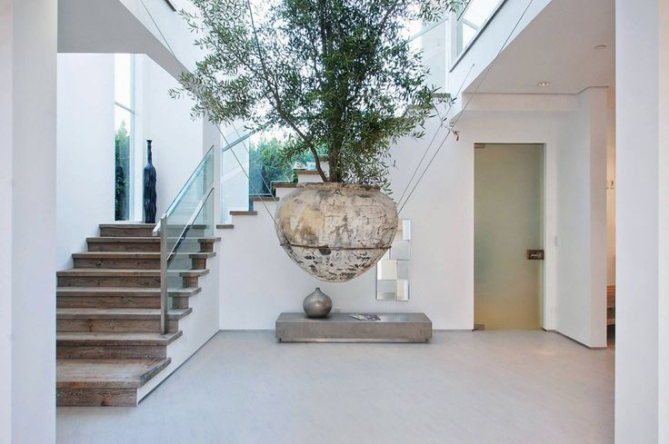 Indoor Trees & Plants - A floating tree in a home designed by Amit Apel Design.
