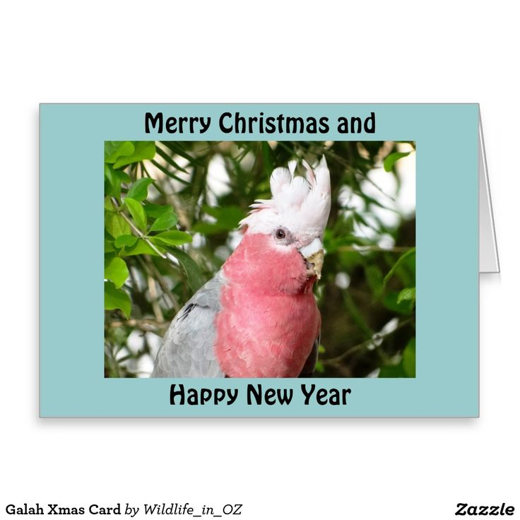 Galah Xmas Card - Australian Wildlife. Click on photo to view item then click on item to see how to purchase that item. #christmascard #xmascard #galah #roseatecockatoo #wildlife #australianwildlife