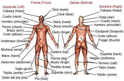 Spanish-English. Cuerpo Humano. Human Body.   Languages   Pinterest