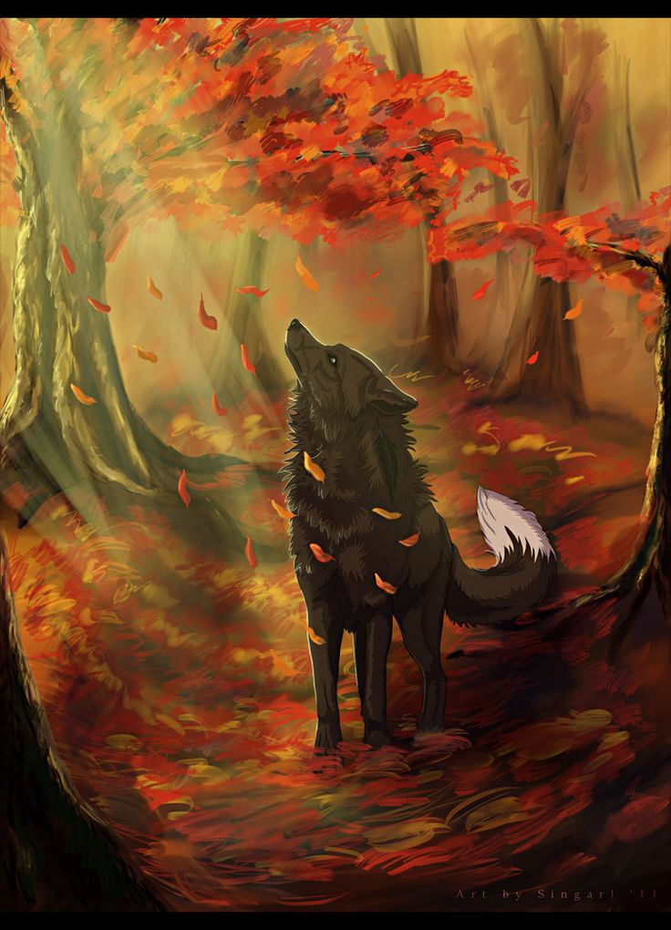Black wolf in autumn forest.