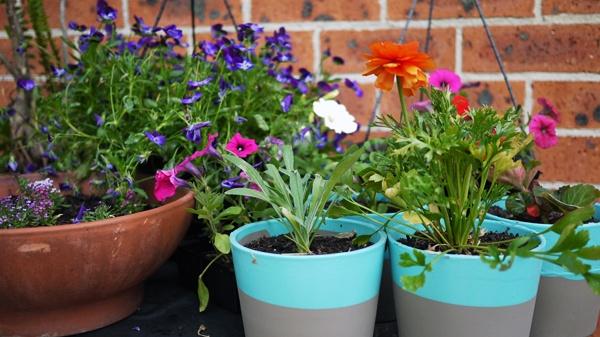 Kitty And Buck: DIY Tutorial Dip-Dye Painted Garden Pots