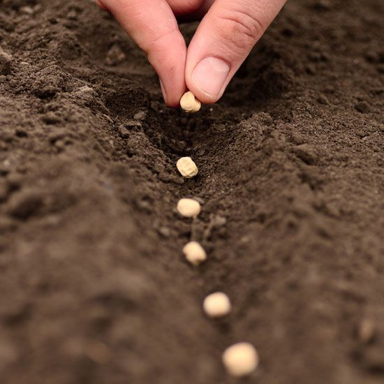 What to Plant Now - Organic Gardening - MOTHER EARTH NEWS