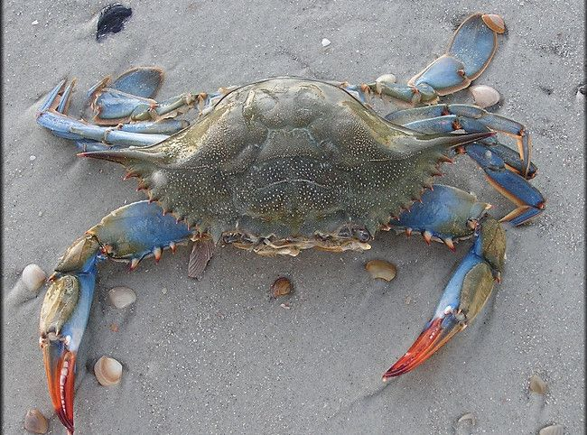 Easy Crab Casserole