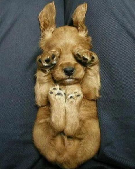 I'm tired!Sleep Dogs, Funny Dogs, Little Puppies, Mondays, Sleepy Puppies, Peek A Boos, Pets, Baby Animal, Eye