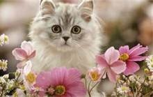 images of kittens - Bing Images