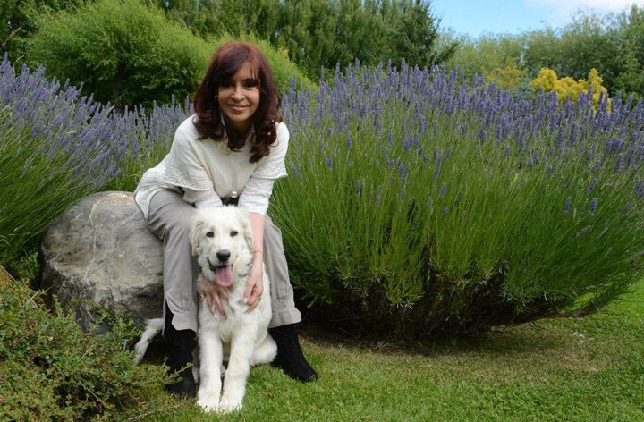 Cristina Kirchner (Argentina). Obsequio de  Hugo Chávez le obsequió un perro a la Presidenta Pertenece a la raza venezolana 'mucuchíes' y se llama Simón, en honor al libertador Simón Bolívar.