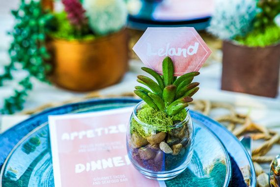 Succulent Wedding Favor, Wedding favor, Succulent wedding favors, decorative centerpieces, succulent plants, flower gift bouquets.