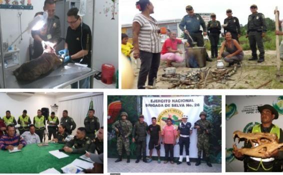 """Acciones operativas policiales.En desarrollo del plan integral para la seguridad del ciudadano """"Corazón Verde"""" La Policía Nacional en el Amazonas realizó importantes acciones preventivas y operativas al concluir el fin de semana."""