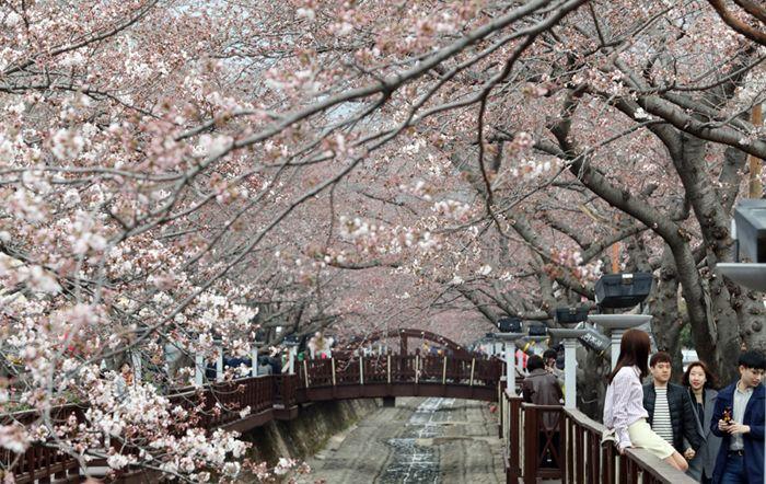 Today's Photo: March 27, 2017 - The Chosun Ilbo (English Edition): Daily News from Korea - Photos