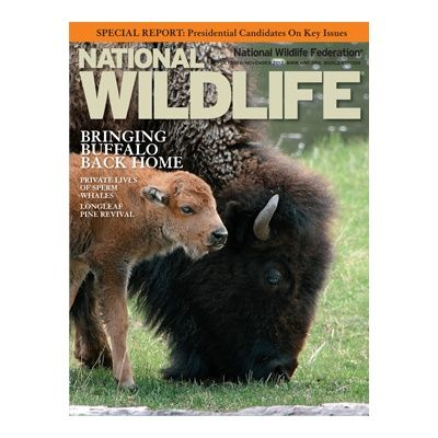 National Wildlife Federation is all about wildlife protection for future generations. It educates and promotes feasible solutions to all citizens of the United States. In its effort to inspire Americans to protect wildlife, it launched its website, where everybody can learn more about conservation and make a difference through cards, magazines.