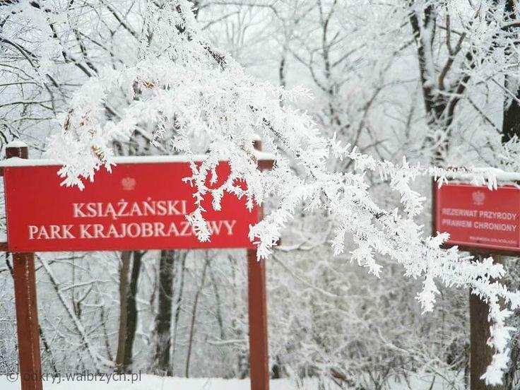 Książański Park Krajobrazowy, styczeń 2017