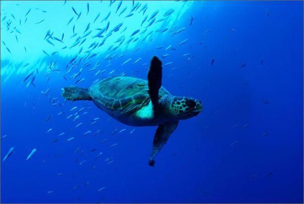 Pacific Ocean Animals Pacific Ocean Underwater Animals