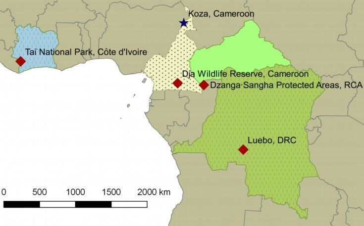 Mystery anthrax-like disease is killing elephants and gorillas across Africa