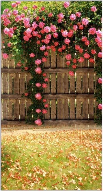 Stunning Garden Addiction Pinterest