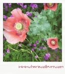 poppies & verbena a great combo