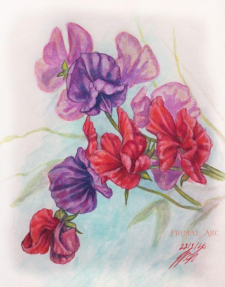 'Sweet Peas', watercolour.