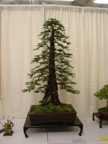38 Glorious Japanese Garden Ideas: 38 Best Images About Japanese Tea Gardens & Bonsai On