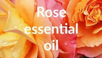Exploring Rose Essential Oil - Bee Sensual