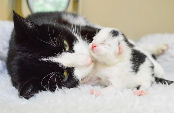 rescue cat mama and kitten at cats protection