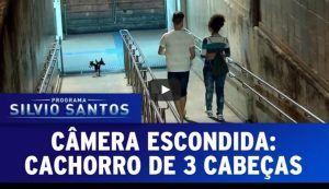 Cachorro de três cabeças persegue pessoas em pegadinha do Silvio Santos