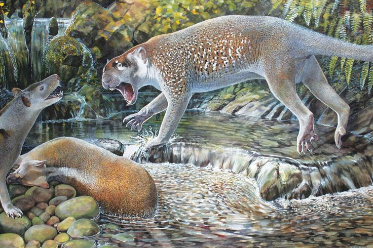 The creature climbed trees in Australia tens of millions of years ago, contemporary with another marsupial lion species.