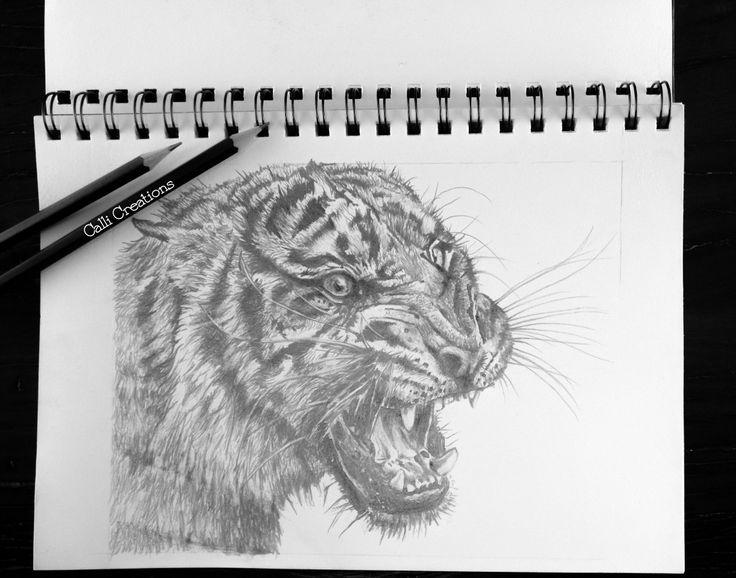 Tiger pencil sketch.  #tigerart #tiger #pencil #sketching #pencilsketch #callicreation #tigerart #animalart #endangeredanimals