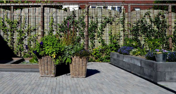 camouflage lelijke muur buren tuin pinterest camouflage. Black Bedroom Furniture Sets. Home Design Ideas