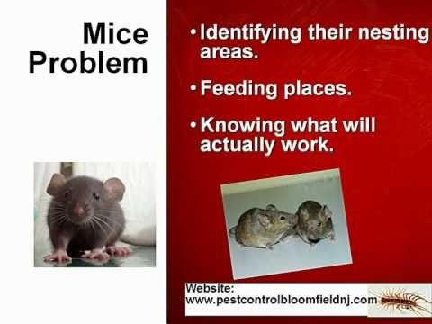 Nj Pest Control  Mice Bed Bug Exterminator Open Saturday Sunday