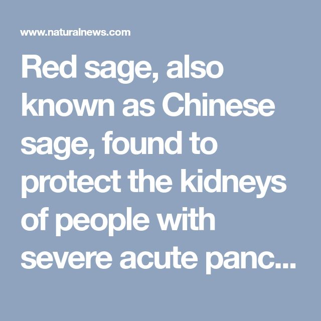 Red sage, also known as Chinese sage, found to protect the kidneys of people with severe acute pancreatitis and obstructive jaundice