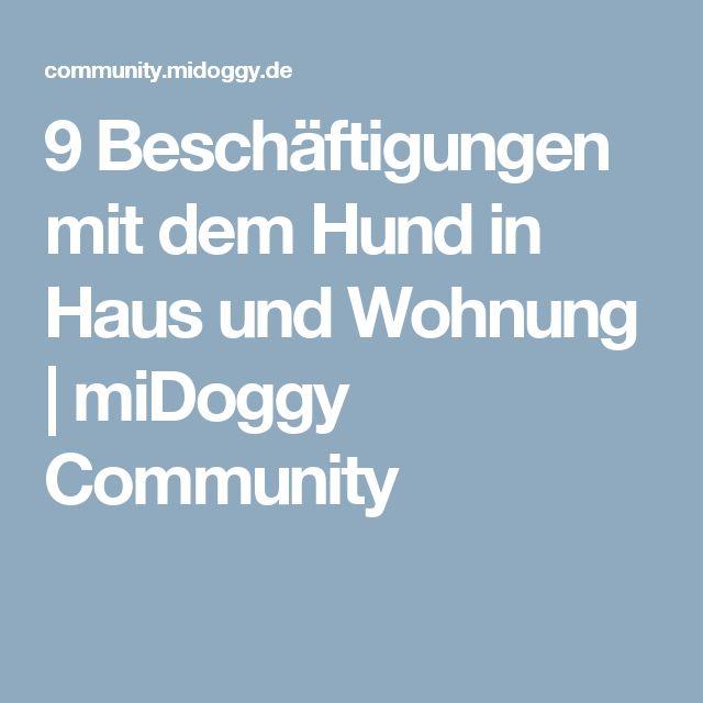9 Beschäftigungen mit dem Hund in Haus und Wohnung   miDoggy Community