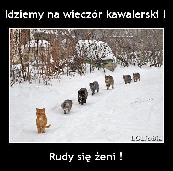 mem z kotami, śmieszne zdjęcia kotów z opisem, fajne teksty, mem z kotem, wesołe, fajne, zabawne, humor z kotkami - kliknij po więcej!