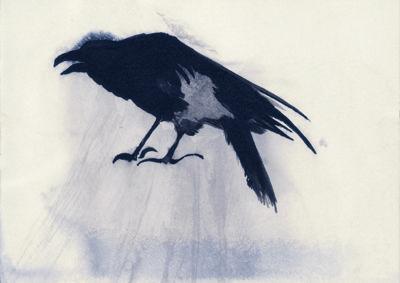 Raven - Olly & Suzi