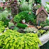 Planted in an old wheelbarrow.  Minature plants..creeping thyme; creeping veronica; sedums; irish moss;