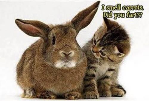 Bientôt Pâques ;)