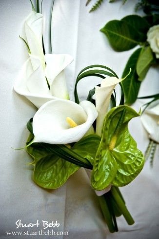 Top 25 ideas about Flowers available in December on ...