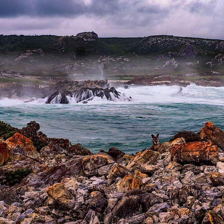 West Coast of Tasmania.