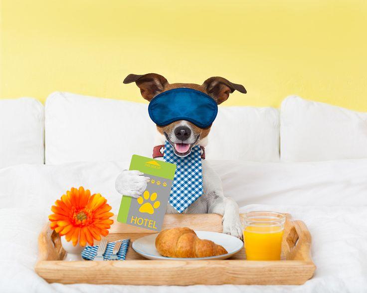 Die besten Hotels der Welt vertrauen auf DUX Betten, weil Ihnen Dein Schlaf am 💛 liegt. Besuche uns und finde selbst heraus was uns so einmalig macht!  #fashion #style #stylish #shopping #luxury #lifestyle #duxiana #bett #dux #bed #beautiful #fun #love #amazing #smile #look #picoftheday #schlafen #rueckenschmerzen #gesundheit
