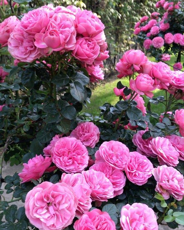 いいね!25.6千件、コメント246件 ― Lena Perminovaさん(@lenaperminova)のInstagramアカウント: 「Мой сад 🌸💕 пусть он вас порадует в этот пасмурный день. 🐐✨」